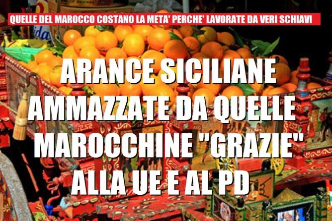 Le arance marocchine danneggiano l'agricoltura italiana