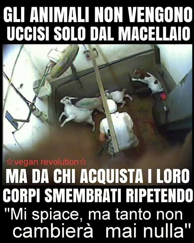 animali_uccisi_da_clienti