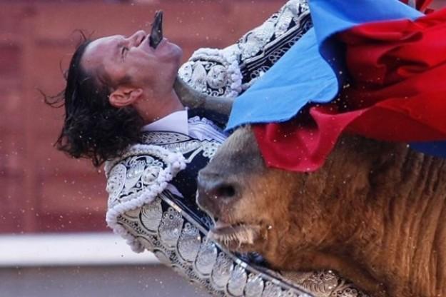 Torero incornato da un toro durante una corrida